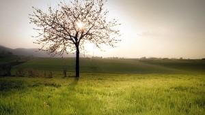 spring-landscapes-tree-blossom-field_33680_600x450