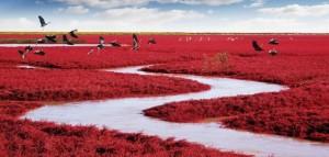 red-beach-panjin-china-702x336