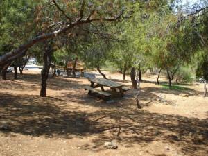 piknik-big