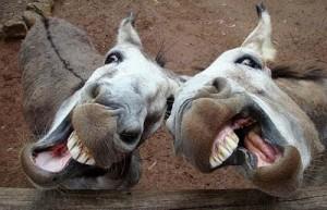 donkeys_998553i